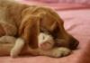 """""""Mèo đến nhà thì khó, chó đến nhà thì sang"""""""